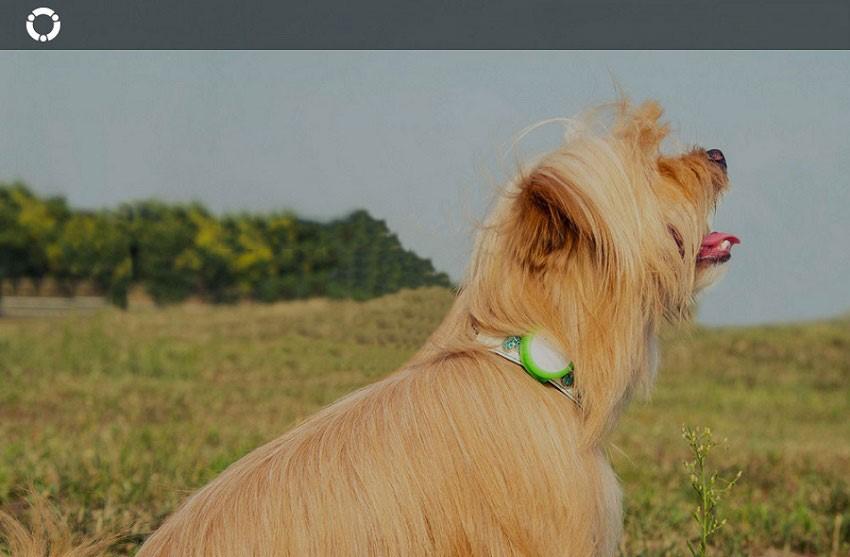 کنترل حیوانات خانگی با محصول جدید شیائومی